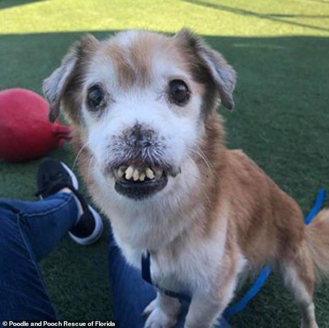 Chú chó bị bệnh không có mũi, răng cái nọ xọ cái kia - tưởng khốn khổ nhất đời ai ngờ lại thành sao MXH - Ảnh 1.