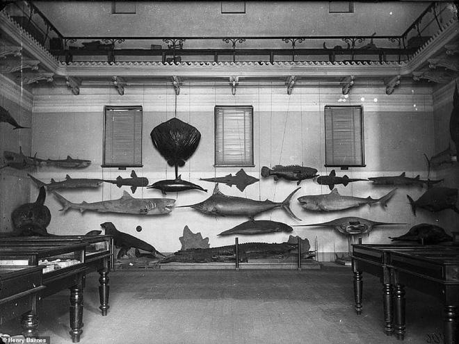 Lần đầu công bố ảnh những sinh vật to lớn kì bí ở Úc hơn 150 năm trước - Ảnh 16.