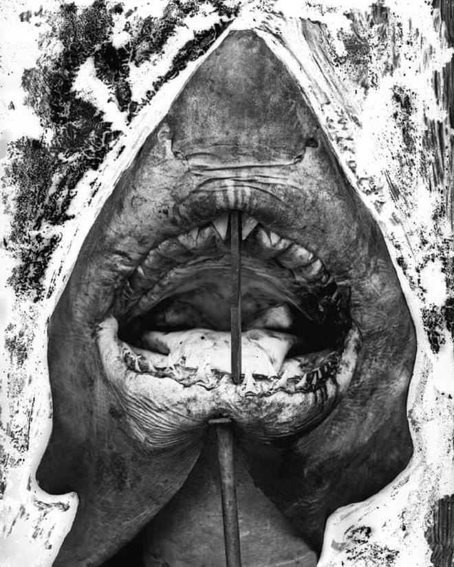 Lần đầu công bố ảnh những sinh vật to lớn kì bí ở Úc hơn 150 năm trước - Ảnh 10.